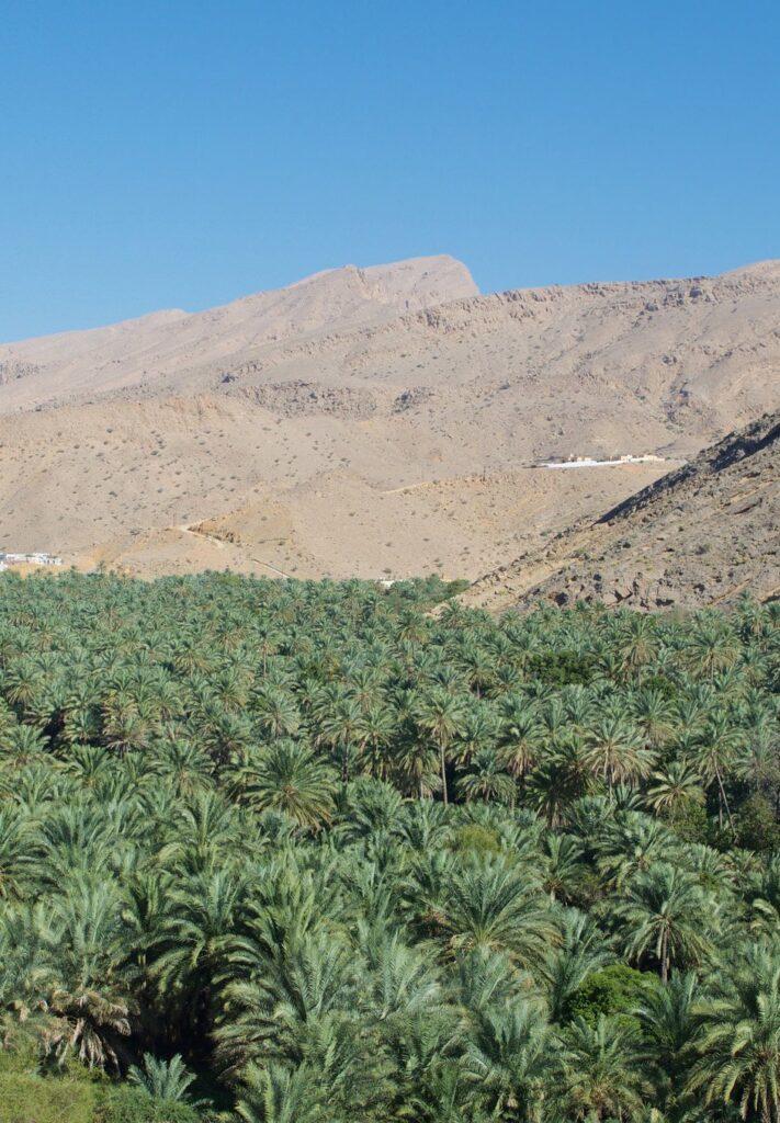 Oasenlandschaft im Oman