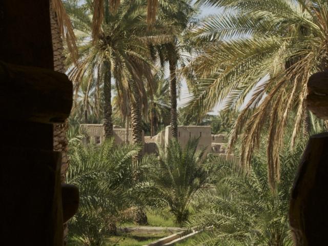 Oase Nizzwa im Oman