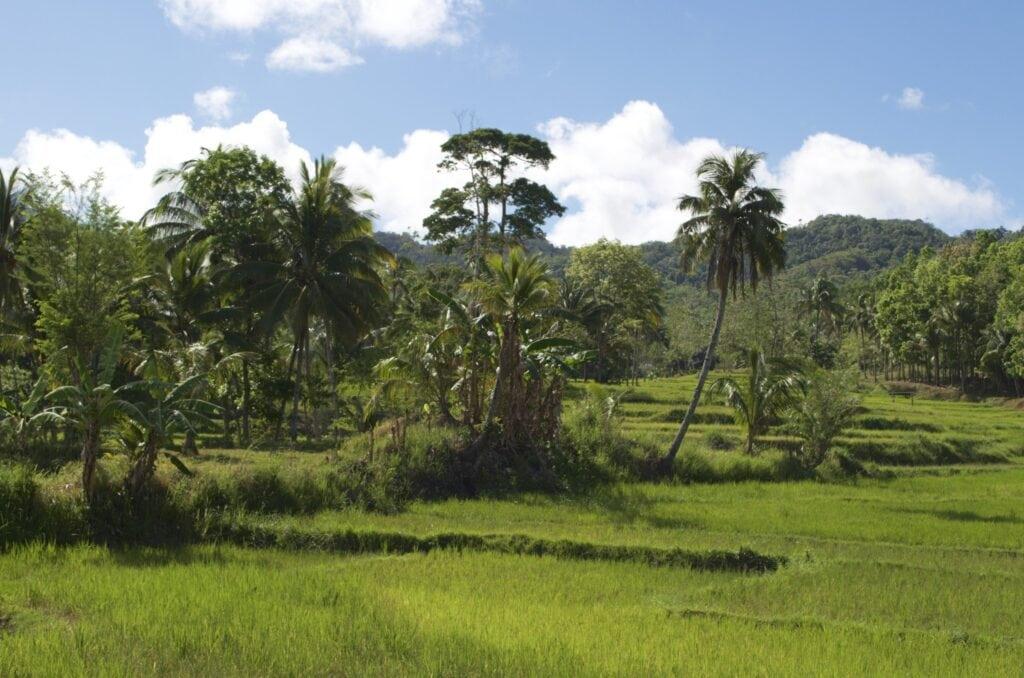 Reisfelder in den Bergen von Bohol