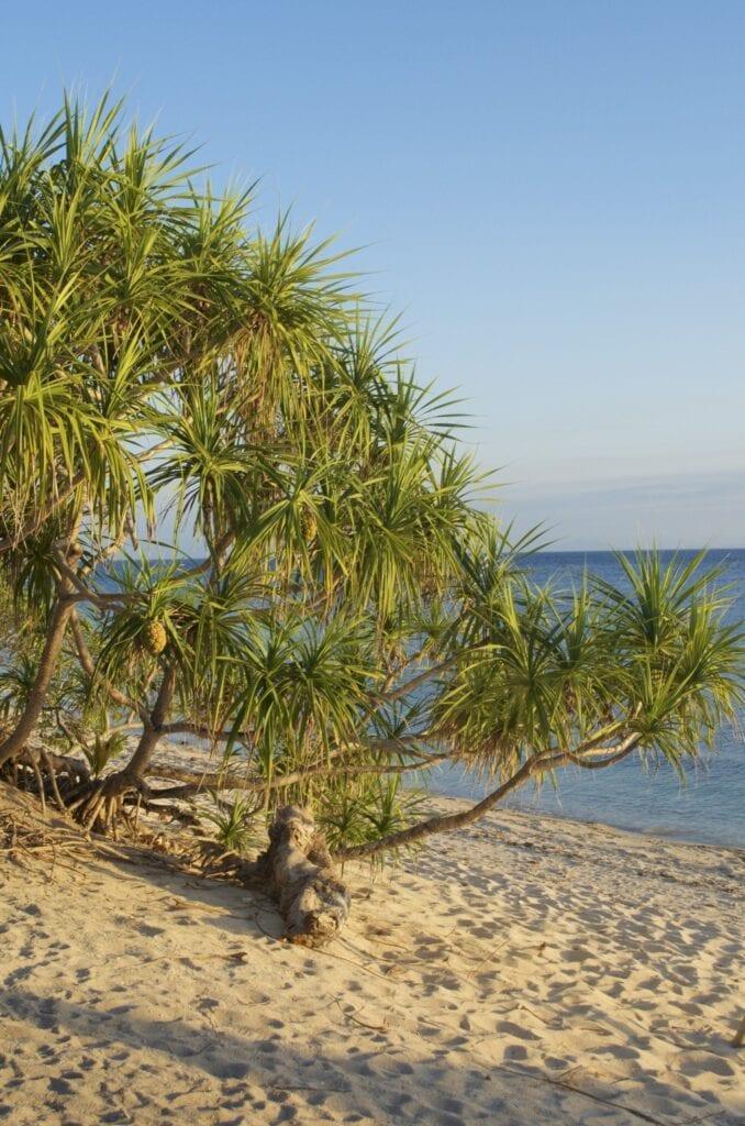 Strand des Coco Groove Beach Resorts
