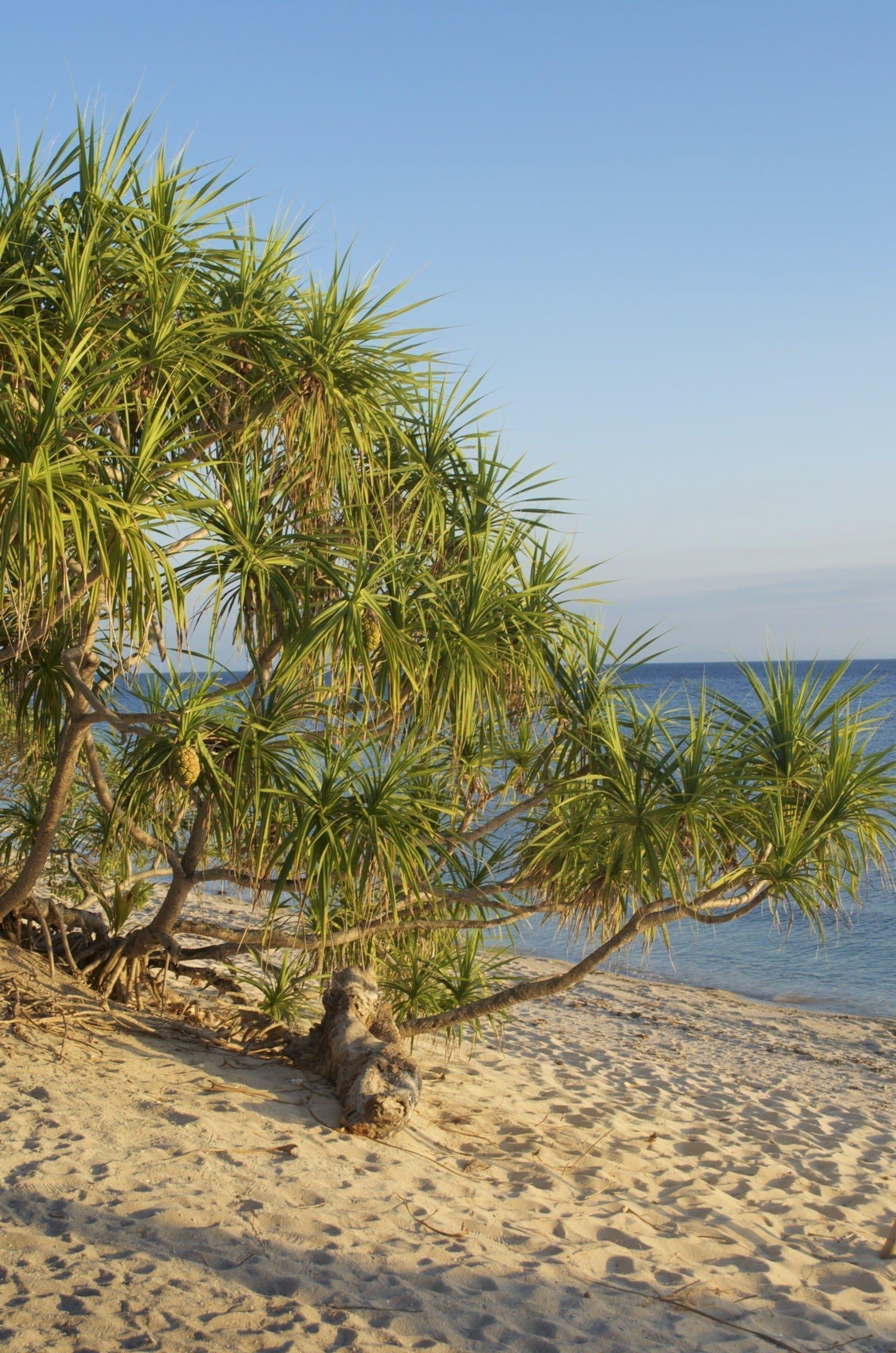 Strand des Coco Groove Beach Resorts auf Siquijor