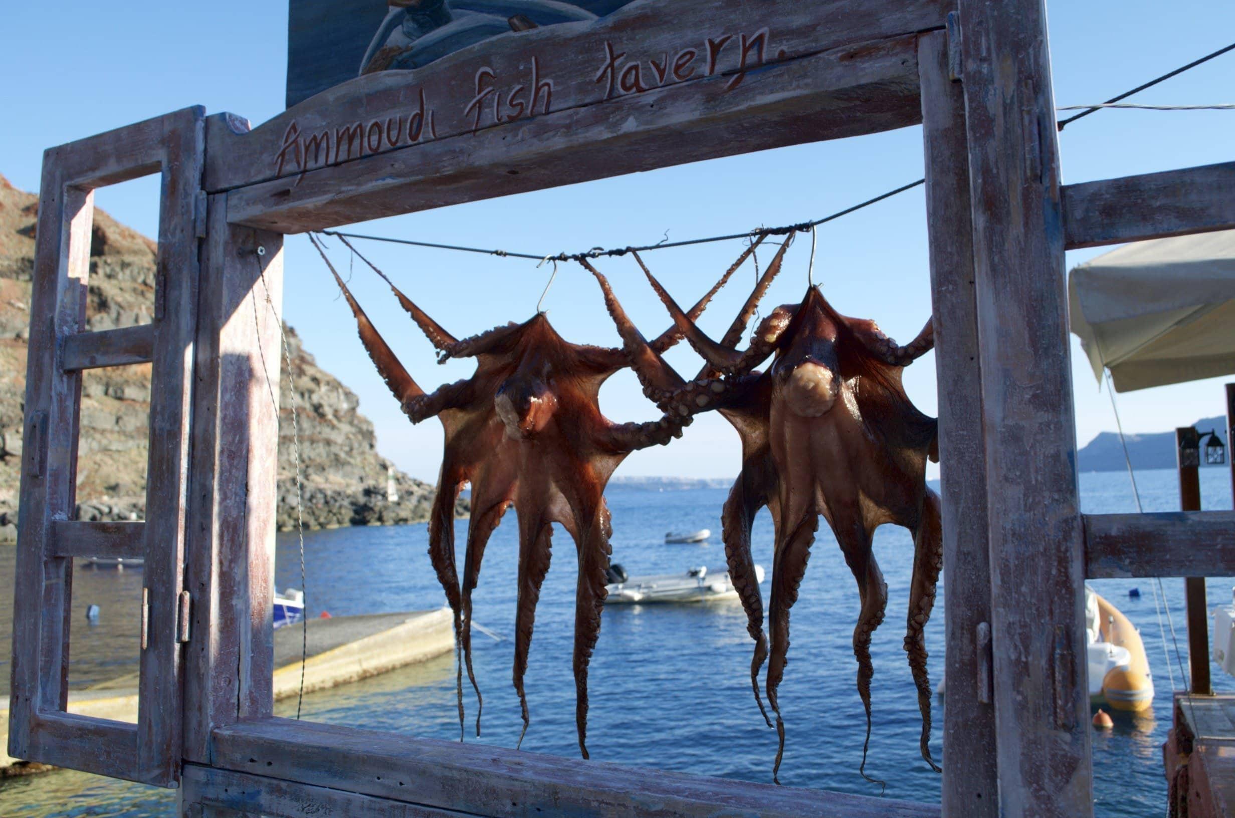 Oktopusse in der Amoudi Fish Tavern