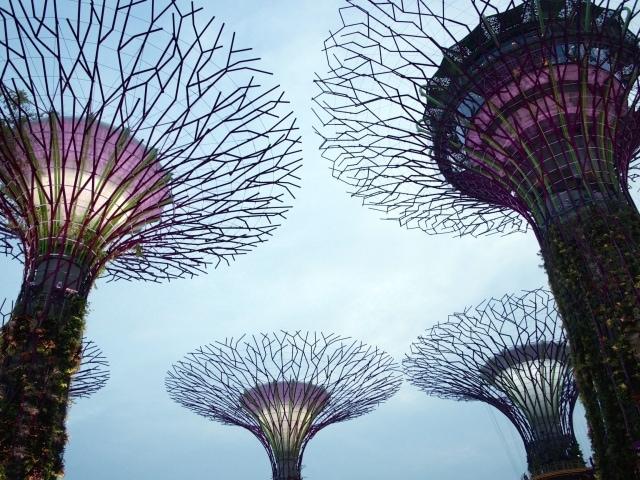 Supertree Grove Singapur beim Eindunkeln