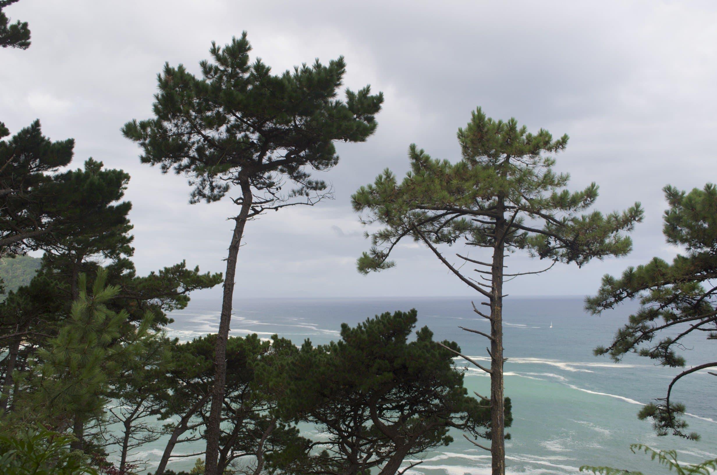 Pinienwälder am Urgull