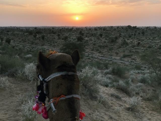 Sonnenuntergang am Rücken eines Dromedars