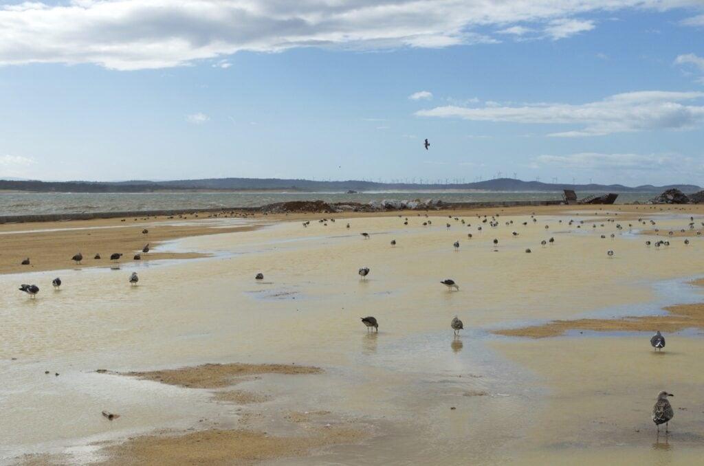 Bucht von Essaouira und Möwen