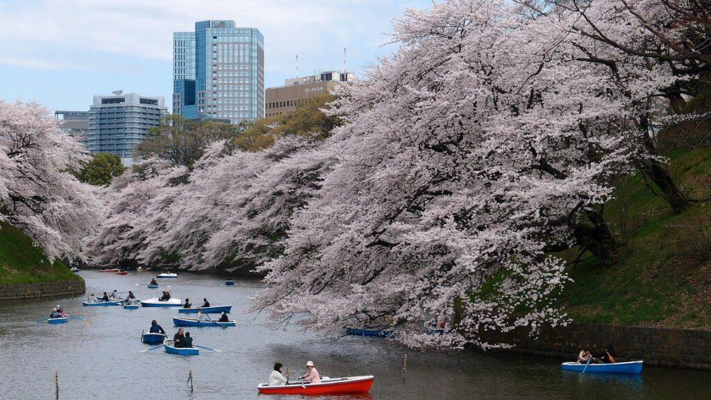 Reisepläne 2017 Japan Kirschblüte