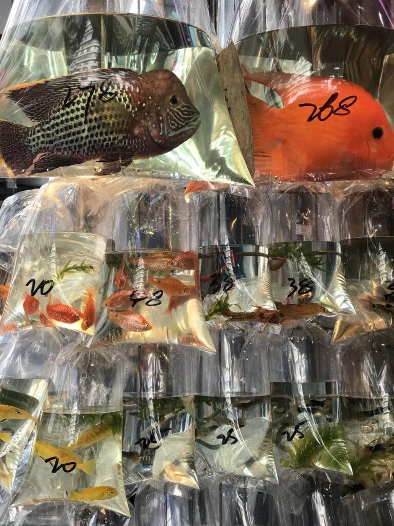 Goldfish Market in Hongkong