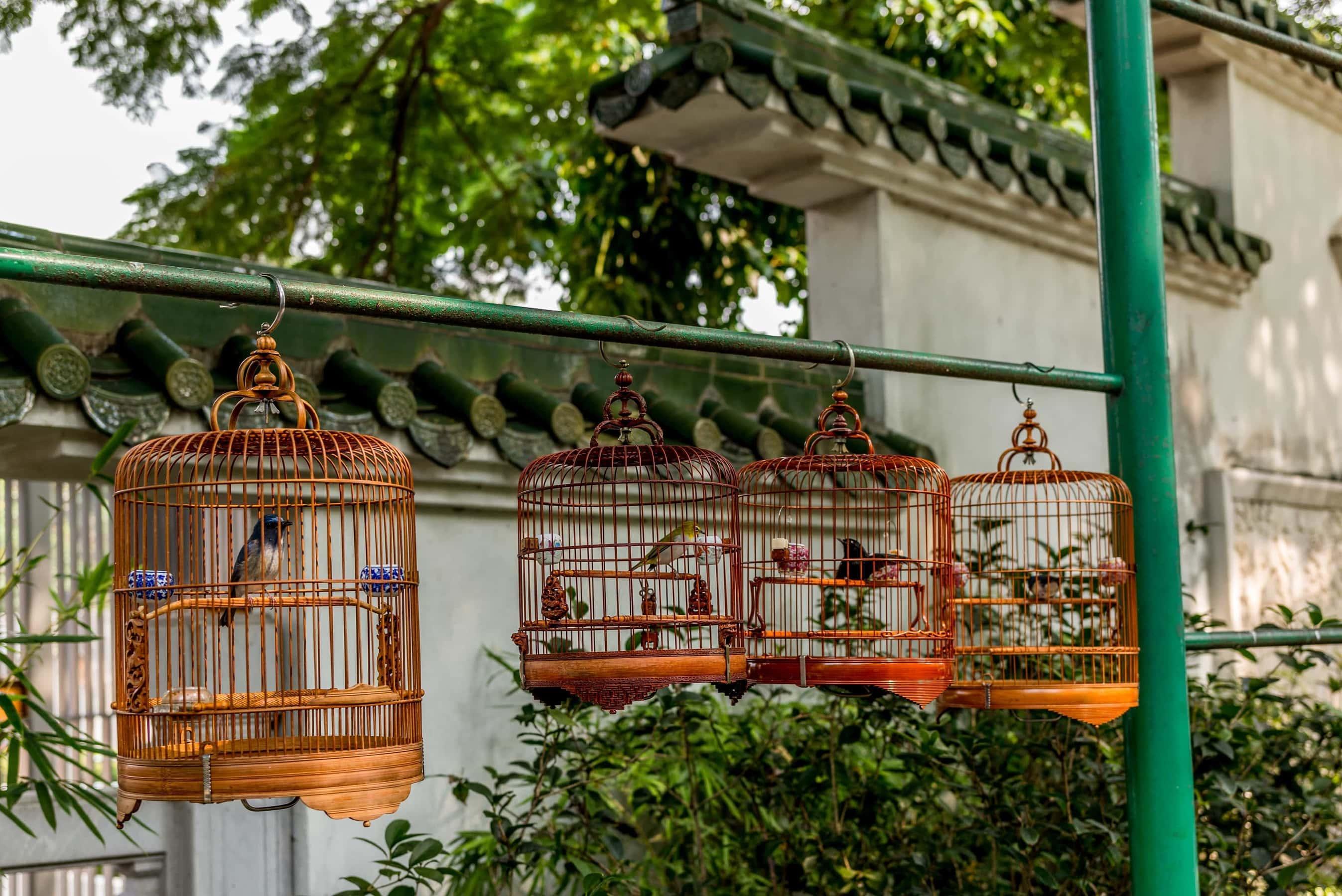 Bird Market im Bird Garden Hongkong