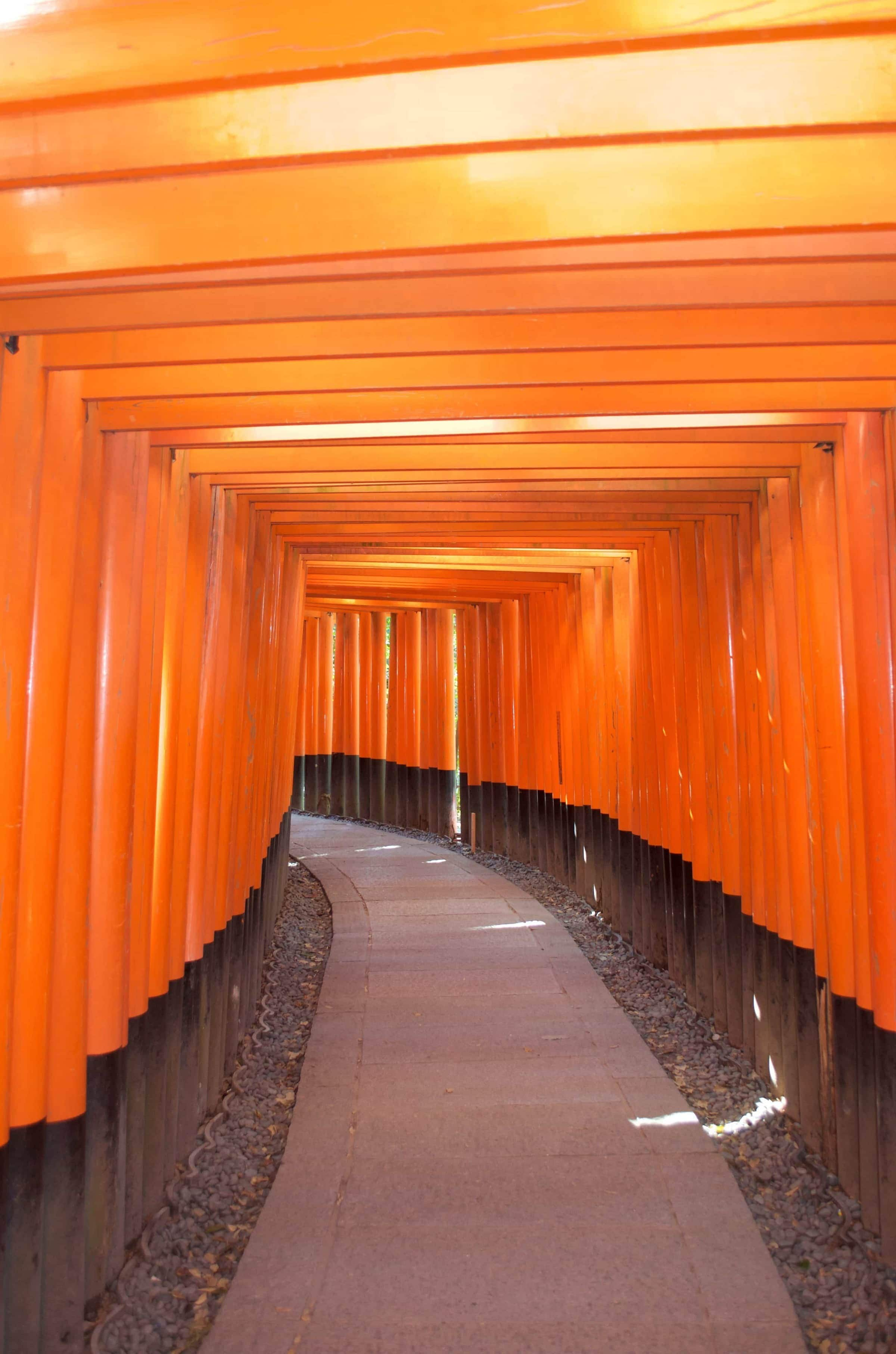 Reisemomente 2017 Fushimi Inari-Taisha Kyoto