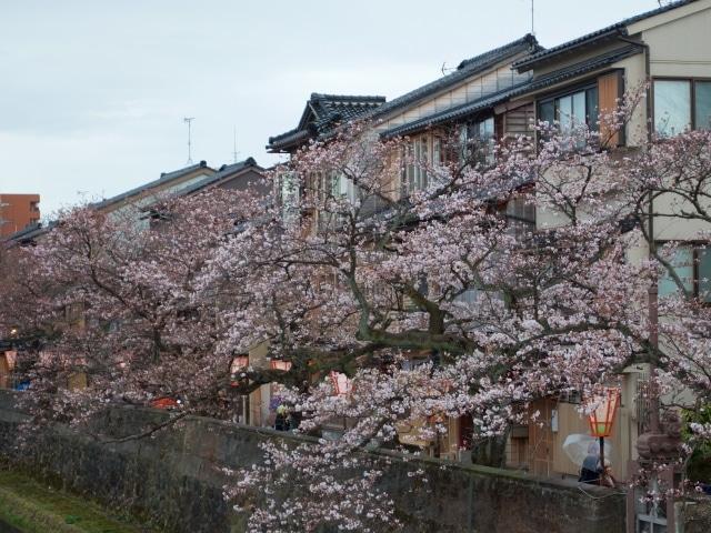 Kirschblüte Kanazawa