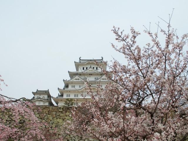 Kirschblüte Himeji