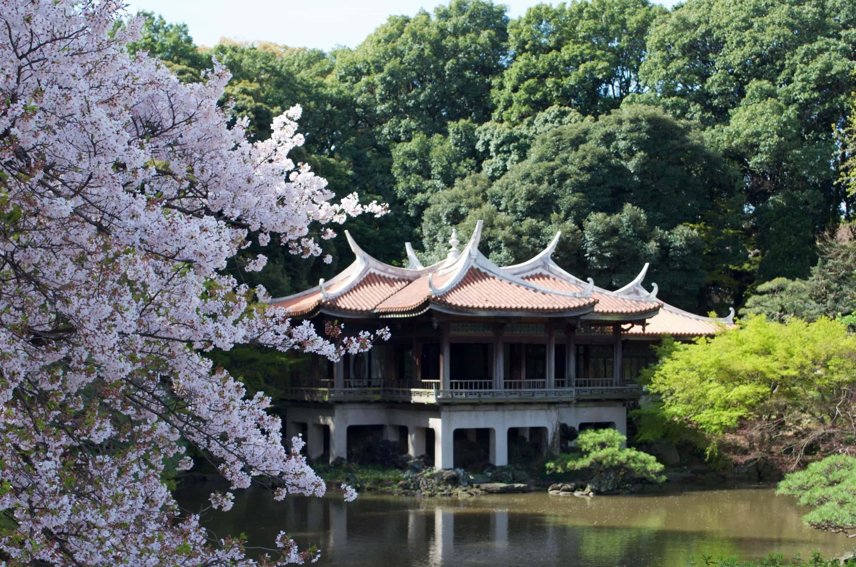 kirschbl te in japan ein traum in rosa und wei. Black Bedroom Furniture Sets. Home Design Ideas
