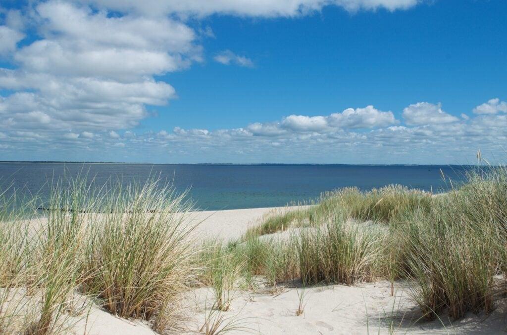 Dünen am Strand am Ellenbogen Sylt
