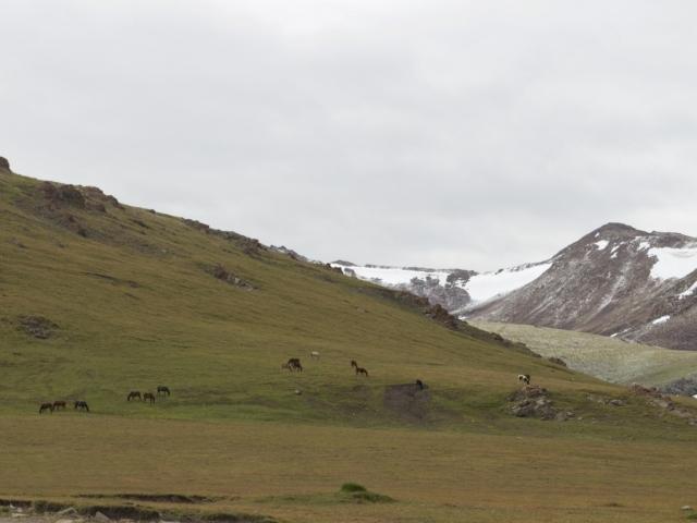 Pferde am Kalmak-Ashuu-Pass Songköl