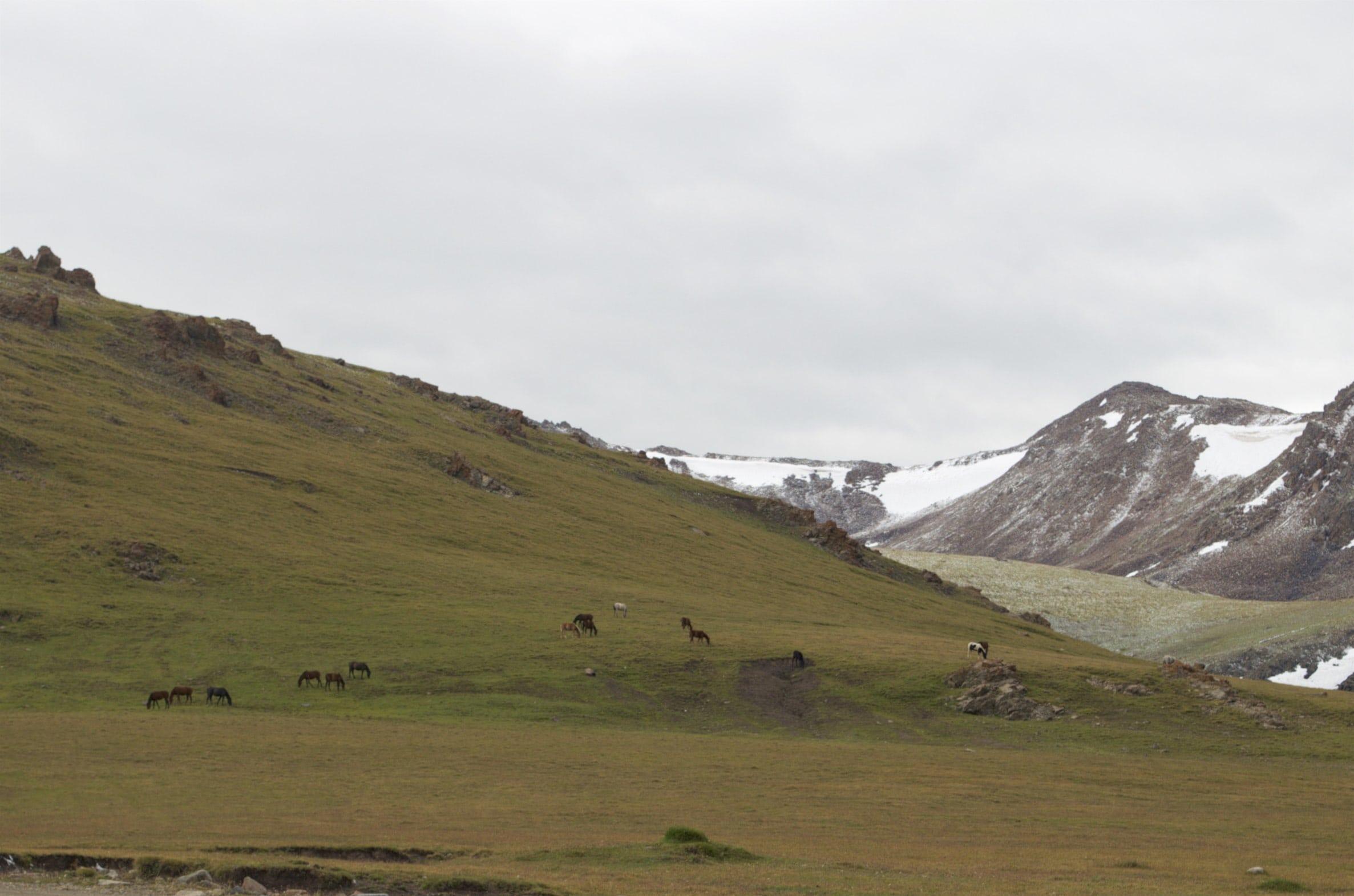 Pferde am Kalmak-Ashuu-Pass