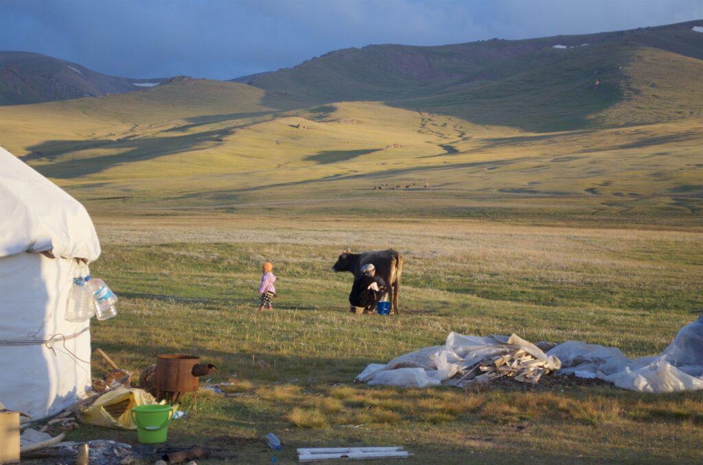 abends wird die Kuh hinter der Jurte gemolken