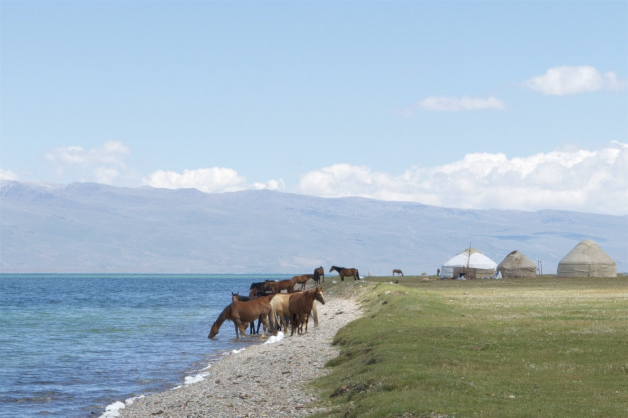 Pferde trinken am Ufer des Songköl