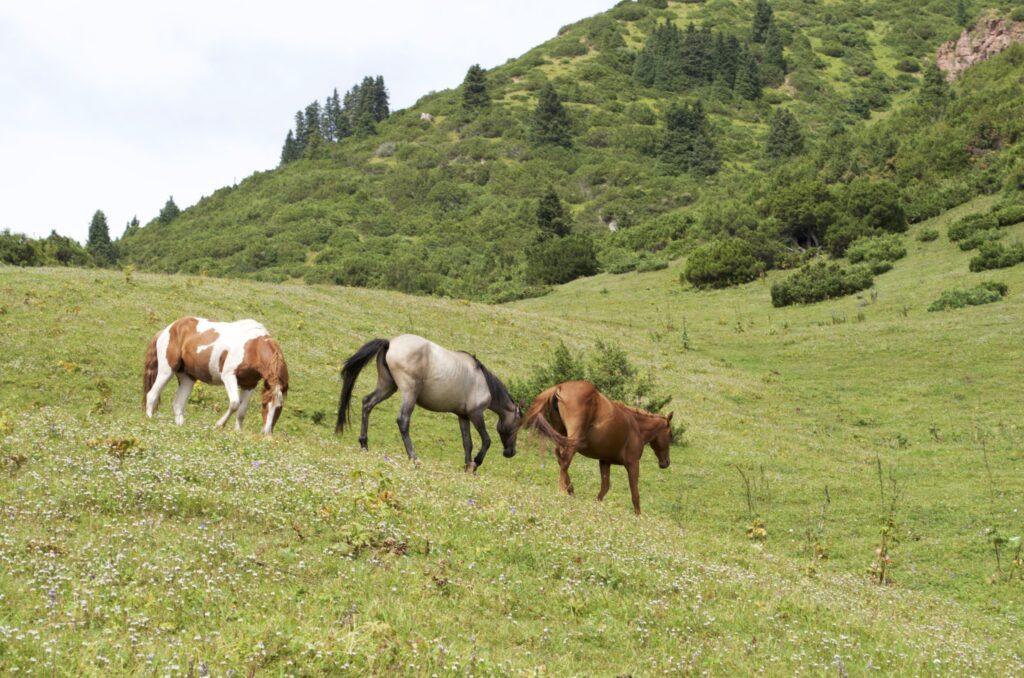 Pferde in der Jety-Ögüz-Schlucht Kirgisistan
