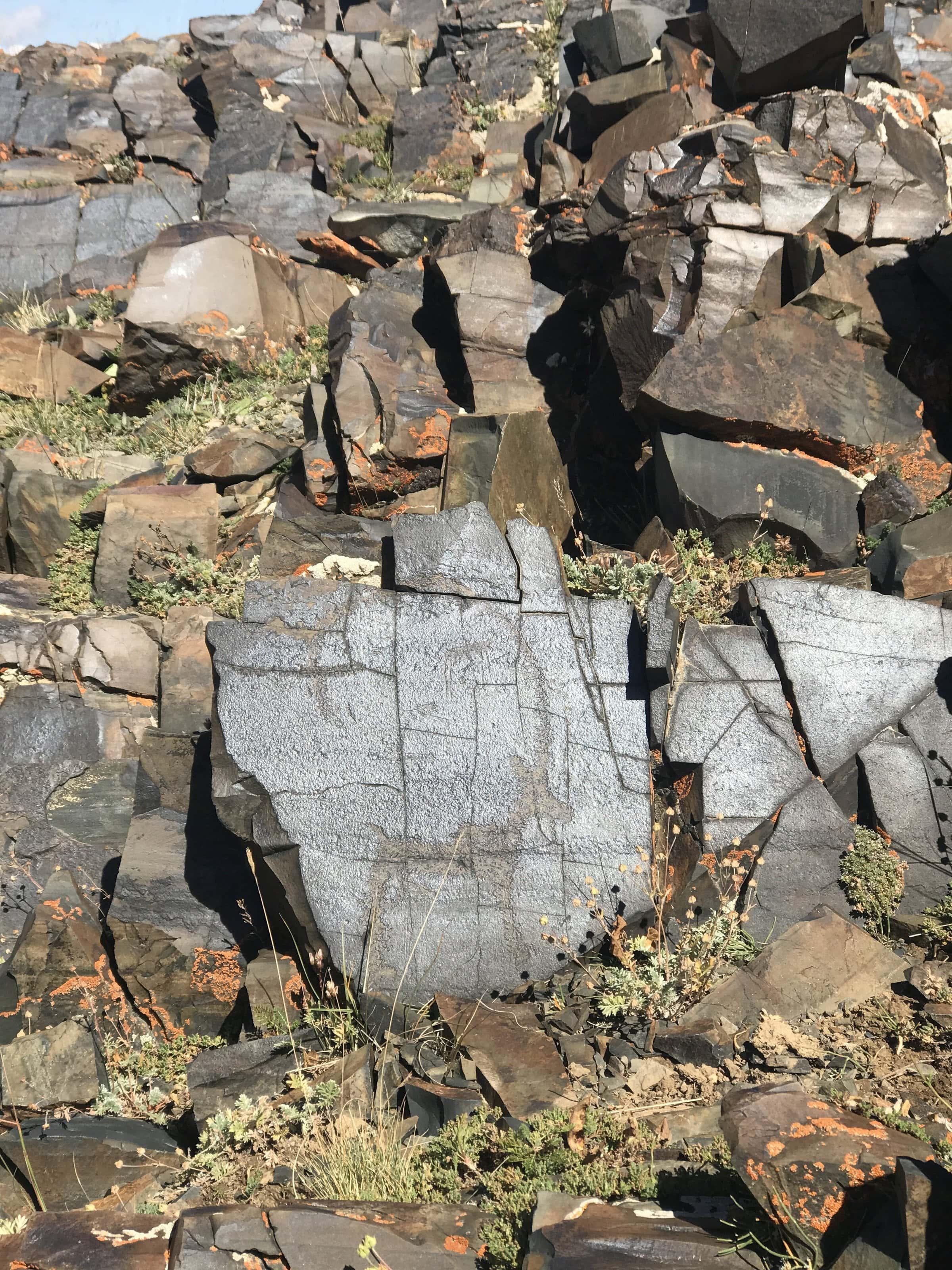 Petroglyphen am Songköl Kirgisistan