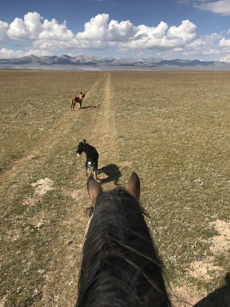 Das Glück dieser Erde liegt auf dem Rücken der Pferde.