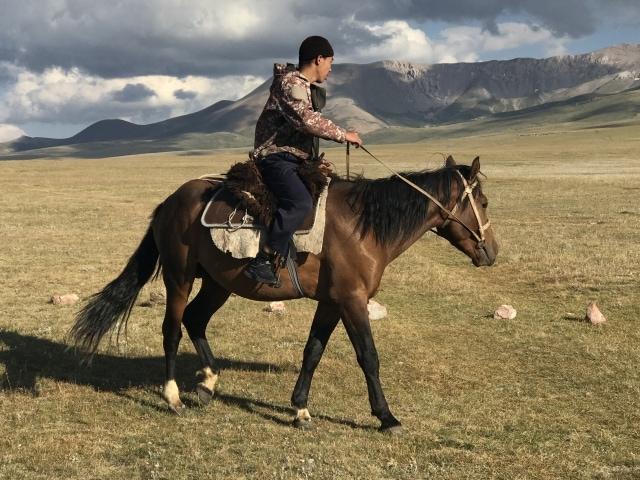 kirgisische Pferde sind äußerst gutmütig