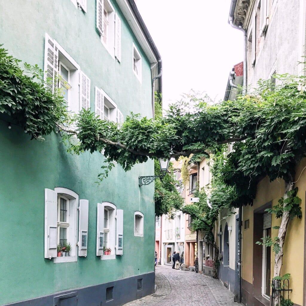 Ranken über die Konviktstraße in Freiburg