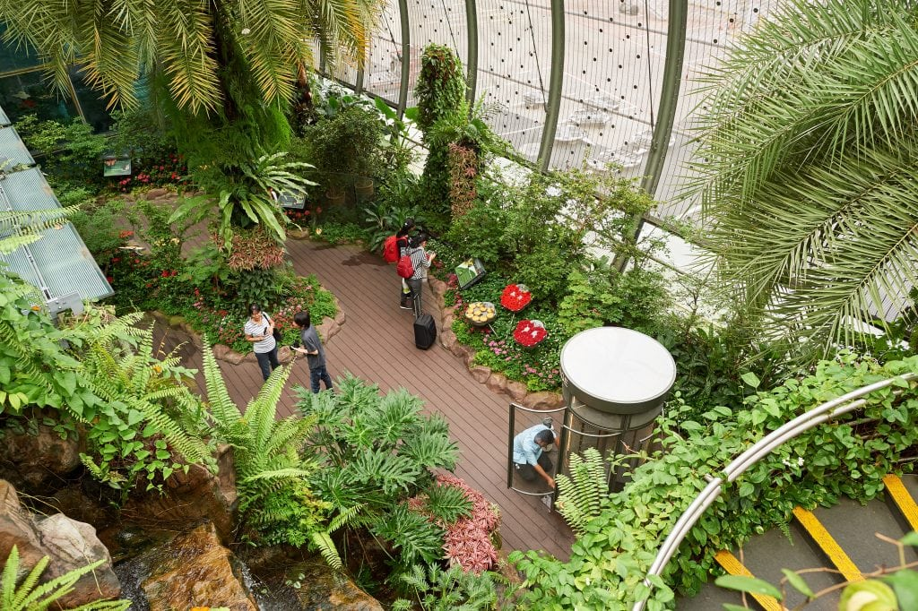 Butterly Garden am Changi Airport Singapur