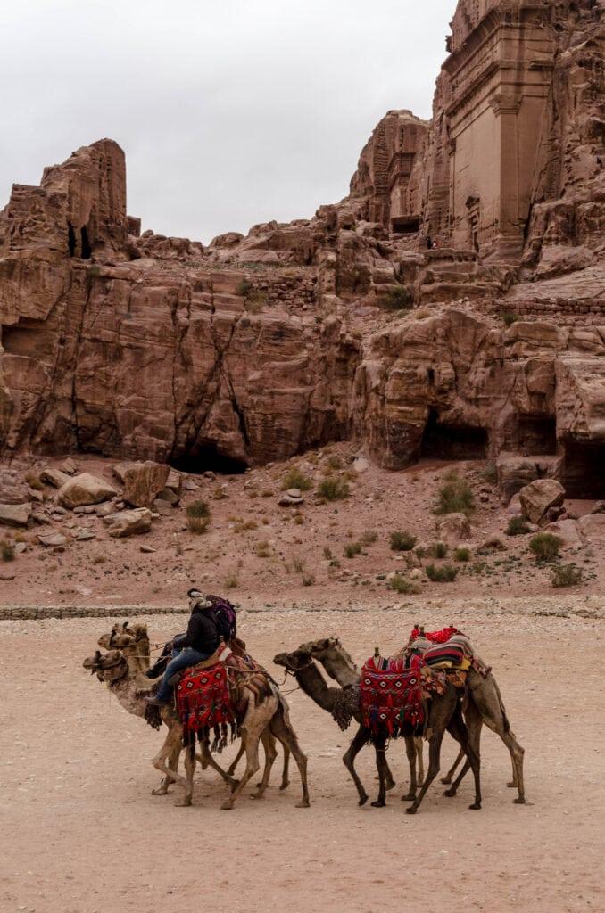 Dromedare zum Reiten für Touristen