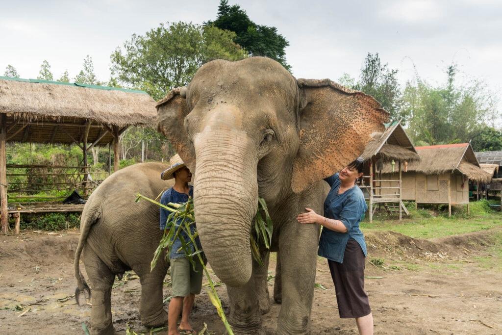 Erste Kontaktaufnahme mit den Elefanten