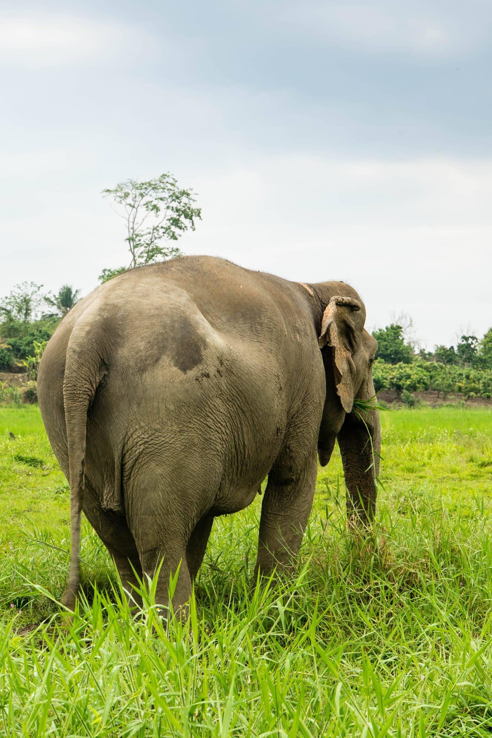 Elefant im Lanna Kingdom Elefant Sanctuary