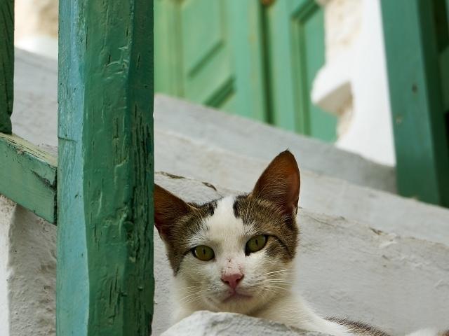 Katze im Kastro-Viertel in der Chora