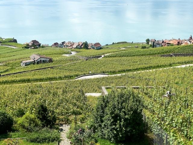 Blick über die Weinberge auf den Genfersee und Rivaz