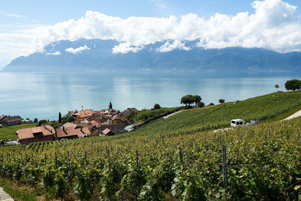 Weinberge oberhalb von Rivaz