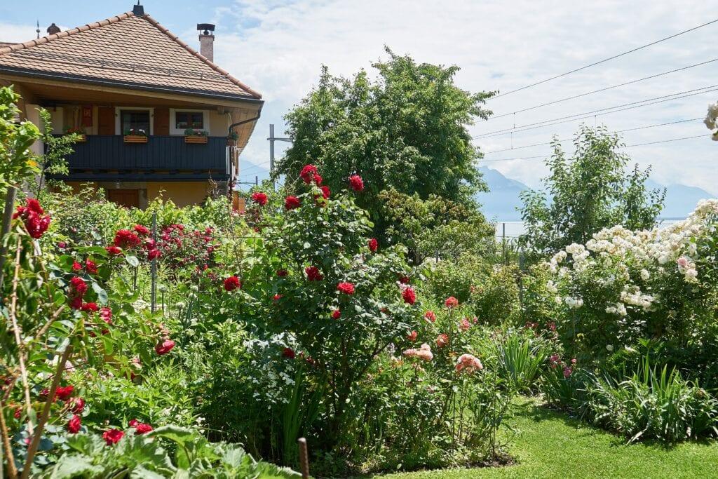 Garten hinter dem Bahnhof in St. Saphorin