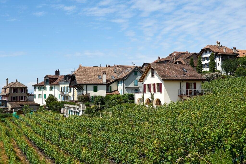 Häuser mitten in den Weinbergen