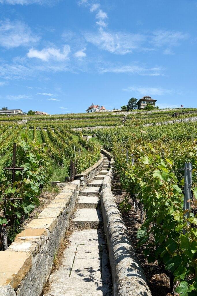 Treppen und Wege durch die Weinberge von Lavaux
