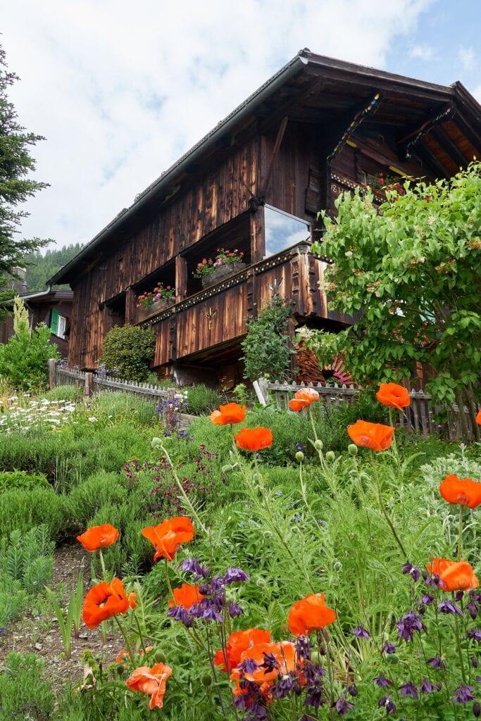Mohnblumen im Garten eines Hauses in Mürren