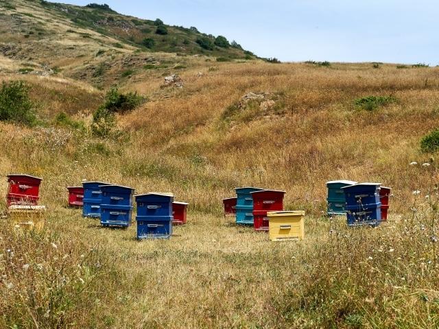 Bienenstöcke in der Nähe des Dorfes