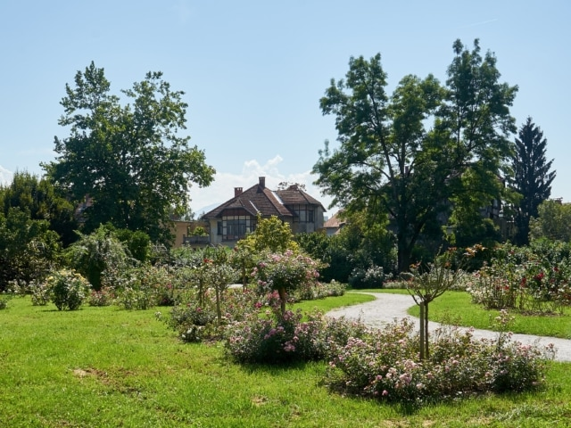 Rosengarten im Tivoli-Park