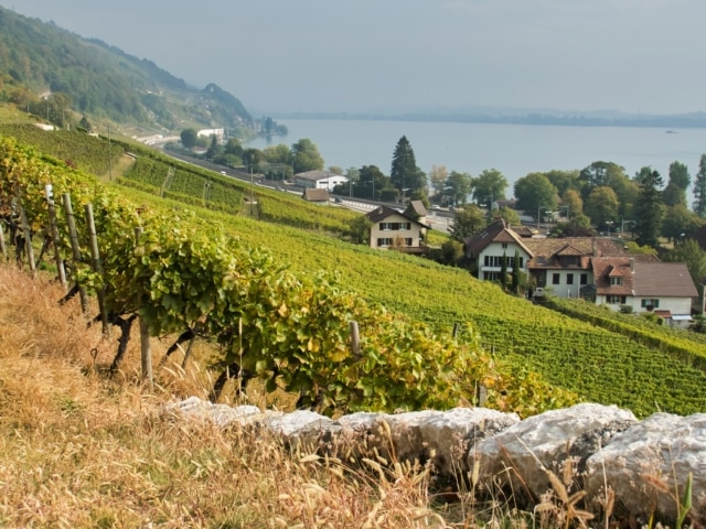 Weinberge am Bielersee