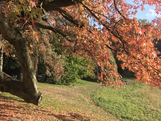 Herbstlaub im Stadtpark Antwerpen