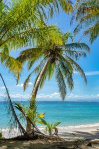 Palmenstrand auf der Insel Zapatilla