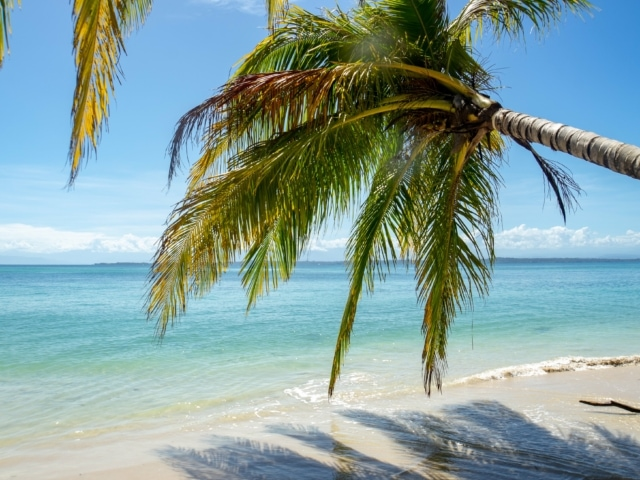 Palmenstrand auf Bocas del Toro