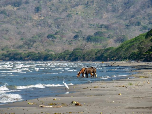 Pferde am Strand von Santo Domingo Ometepe