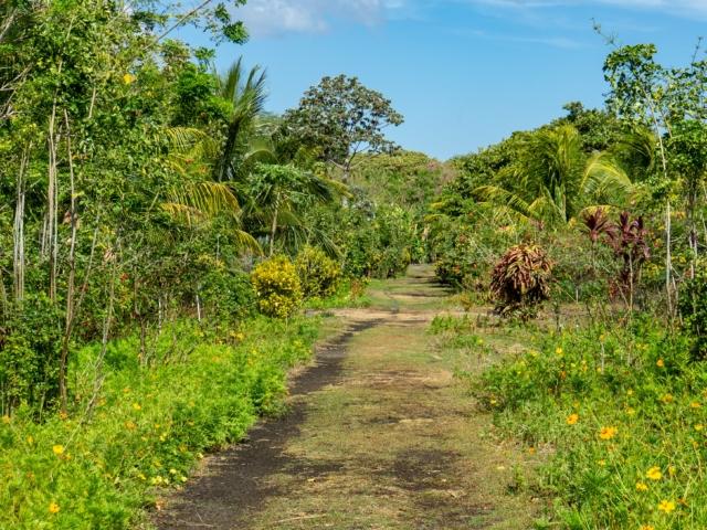 Weg durch das Bioreservat