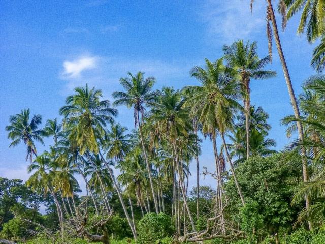 Naturlandschaft auf Ometepe